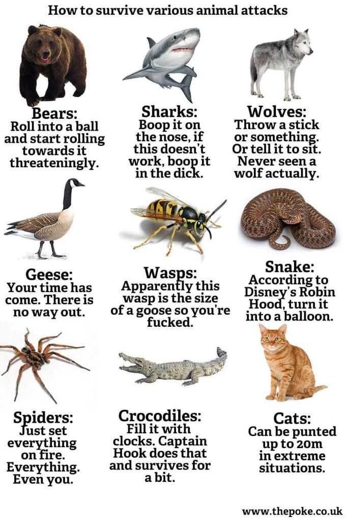 chart showing everyone how to survival an animal attack