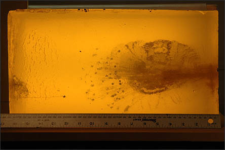 Image of #2 Birdshot fired in ballistic gel