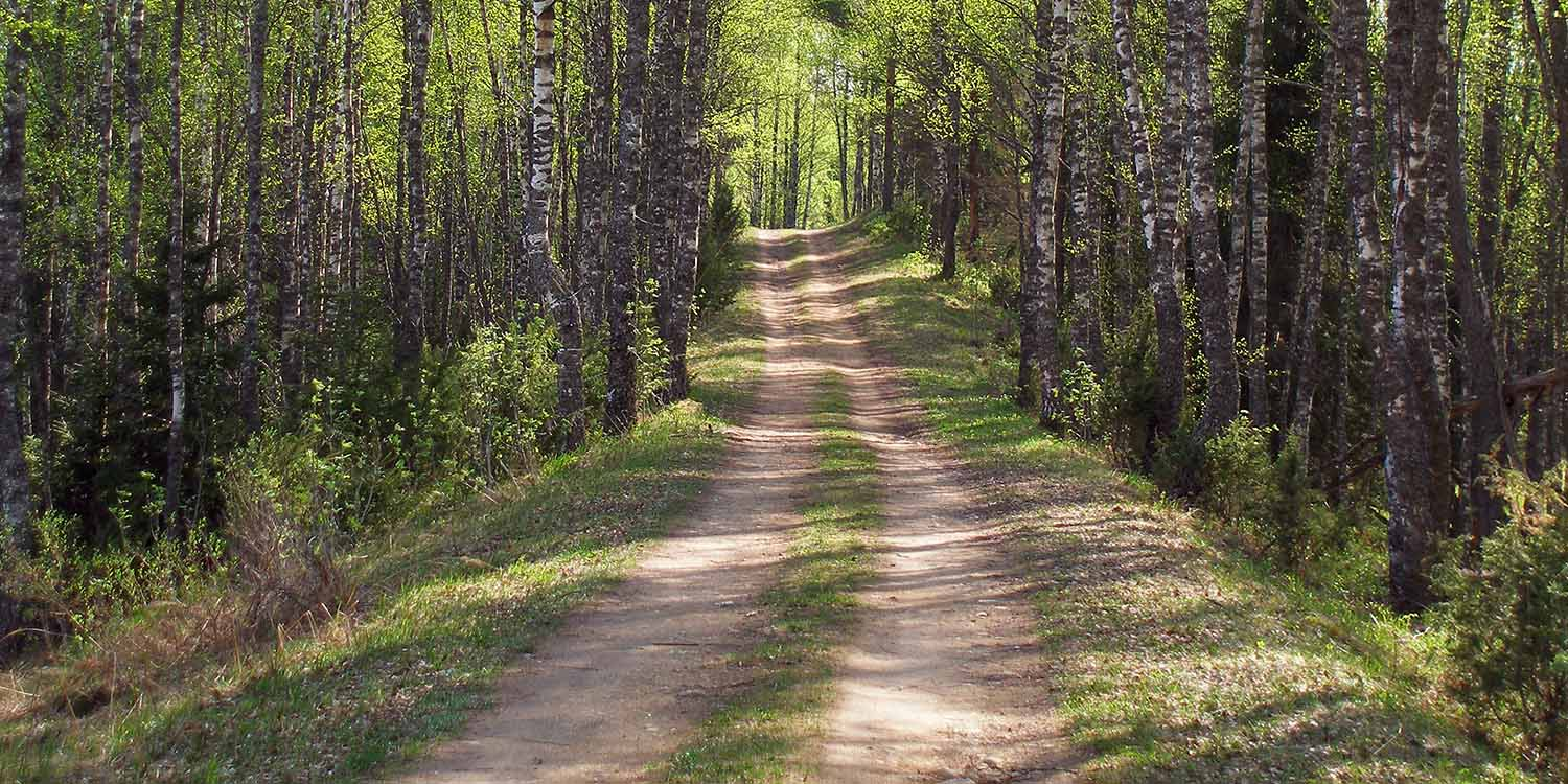 Image of a trail