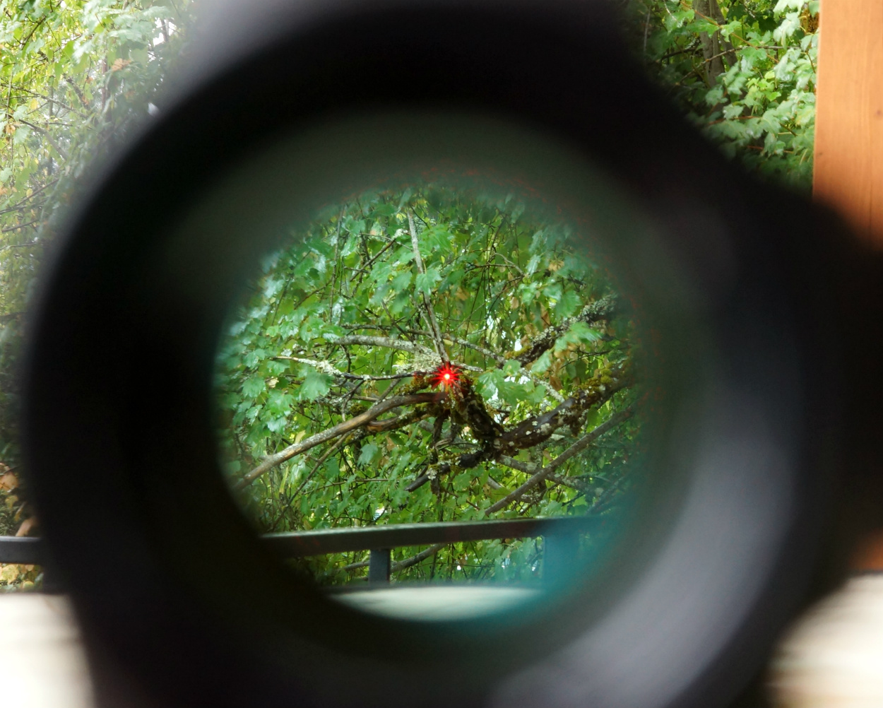 image showing a red dot on a scope
