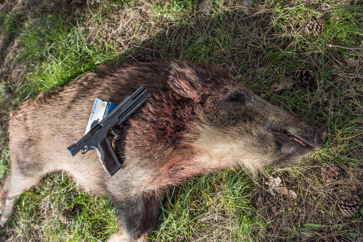 a picture of a Boar killed with an FK Field Pistol