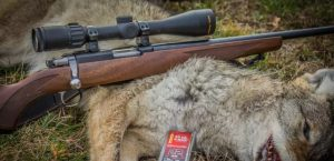a picture of a Coyote killed with .22 magnum rifle