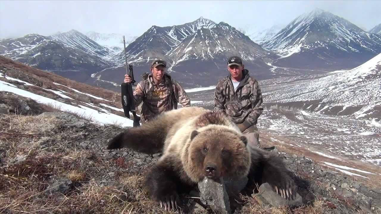a picture of a grizzly taken in Alaska